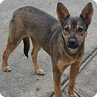 Adopt A Pet :: Austina - Houston, TX