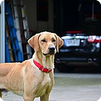Adopt A Pet :: Brodie - Cumming, GA
