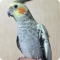 Adopt A Pet :: Frances - Woodbridge, NJ