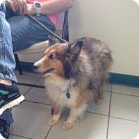 Adopt A Pet :: Dunkin - Rockaway, NJ