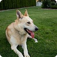 Adopt A Pet :: Trooper - West Richland, WA