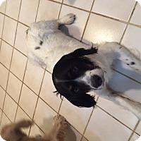 Adopt A Pet :: Bubbles - Sugarland, TX