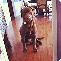 Adopt A Pet :: Porter (Buzz) - Cumming, GA