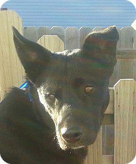 Labrador Retriever Mix Dog for adoption in Manhattan, Kansas - Shiloh