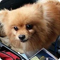 Adopt A Pet :: Teddy - Brooksville, FL