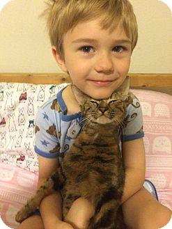 Domestic Mediumhair Cat for adoption in Mansfield, Texas - Ella