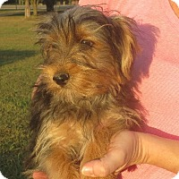 Adopt A Pet :: Edward - Greenville, RI