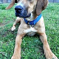 Adopt A Pet :: Luna - Huntsville, AL