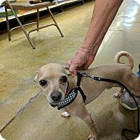 Adopt A Pet :: Milton - Sacramento, CA