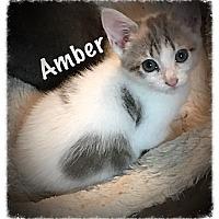 Adopt A Pet :: Amber - Cleveland, TN