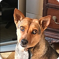 Adopt A Pet :: Celine - Long Beach, NY