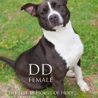 Adopt A Pet :: DD - Lindenwold, NJ