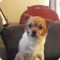 Adopt A Pet :: Teddy - Allentown, NJ