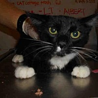 Adopt A Pet :: A594882 - Long Beach, CA