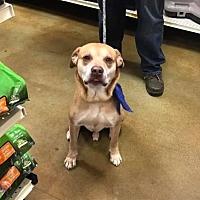 Adopt A Pet :: Harrington - Beckley, WV