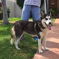 Adopt A Pet :: Summer - Downey, CA