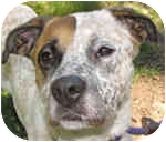 Boxer/Hound (Unknown Type) Mix Dog for adoption in Eatontown, New Jersey - LuLu