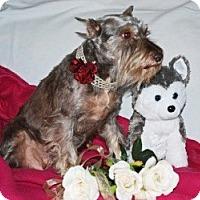 Adopt A Pet :: Laci - North Benton, OH