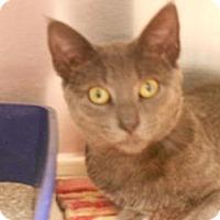 Adopt A Pet :: Dorian - Maywood, NJ