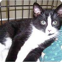 Adopt A Pet :: Thumper - Mission, BC