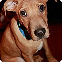 Adopt A Pet :: Frankie Francesco - Hastings, NY