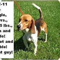 Adopt A Pet :: # 481-11  RESCUED! - Zanesville, OH