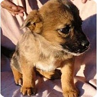 Adopt A Pet :: Spatter - Allentown, PA