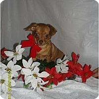 Adopt A Pet :: Ollie - Chandlersville, OH