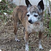 Adopt A Pet :: Ruby - Kempner, TX