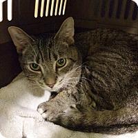 Adopt A Pet :: Scamp - Byron Center, MI