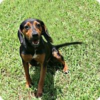 Adopt A Pet :: Quint - Lufkin, TX
