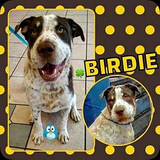 Pointer Mix Dog for adoption in Scottsdale, Arizona - Birdie