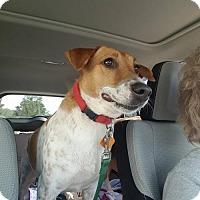 Adopt A Pet :: PINKY - Smithfield, PA