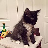 Adopt A Pet :: Buddy - Herndon, VA