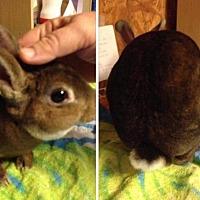 Adopt A Pet :: Studley Chew-right - Paradis, LA