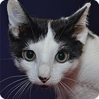Adopt A Pet :: Pablo - Lenexa, KS