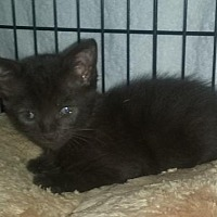Adopt A Pet :: Cococa - Woodbury, NJ