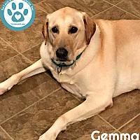 Adopt A Pet :: Gemma - Kimberton, PA
