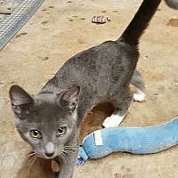 Adopt A Pet :: Usher - Gainesville, GA
