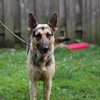Adopt A Pet :: Diego - Hillside, IL