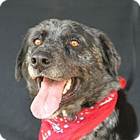 Adopt A Pet :: Tom Hanks - Plano, TX