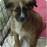 Adopt A Pet :: Spearmint - HANDSOME PLUS! - Phoenix, AZ