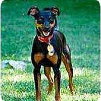 Adopt A Pet :: Jack - Florissant, MO