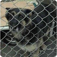 Adopt A Pet :: Reba - BC Wide, BC