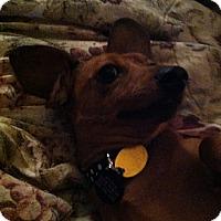 Adopt A Pet :: Stitch - Vale, OR