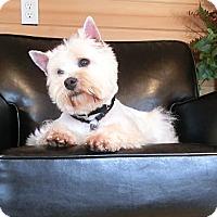Adopt A Pet :: FIONA - GARRETT, IN