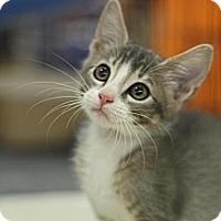 Adopt A Pet :: Hobbes - Sacramento, CA