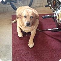 Adopt A Pet :: Daisy - Carey, OH