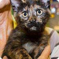 Adopt A Pet :: Ella - Irvine, CA