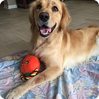 Adopt A Pet :: Dolly - Murdock, FL